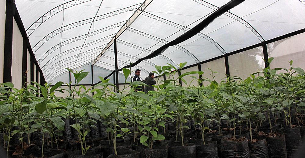 Promueven producci n de plantas medicinales agencia ip for Produccion de plantas en vivero pdf