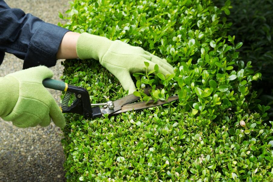 Ofertar n 100 vacancias para trabajos de jardiner a en el for Jardineria fotos